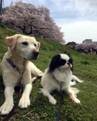 介助犬・聴導犬育成 街頭募金活動